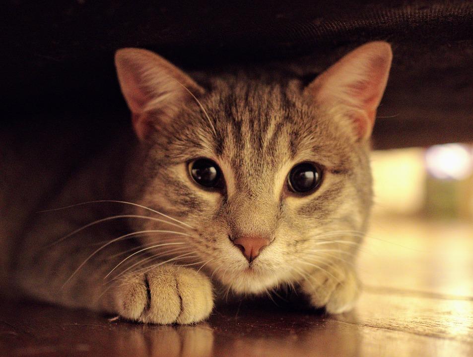 Когда Кот Пришел В Дом