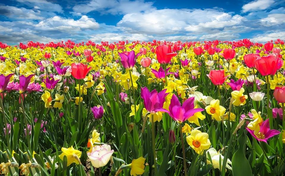 Цветочный гороскоп: какое растение принесет удачу