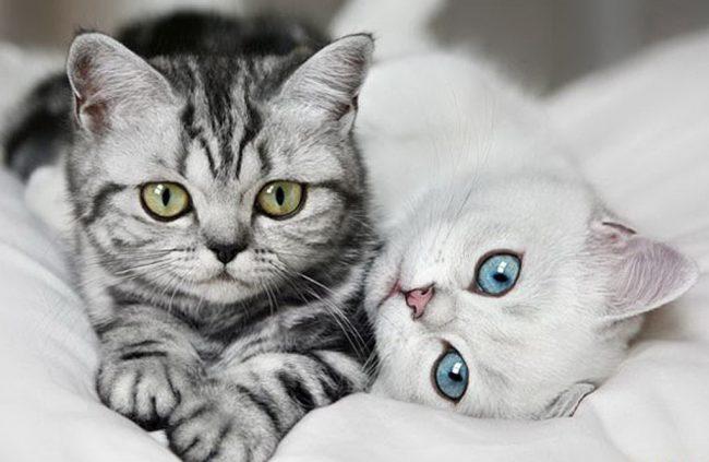 Кошки — тайные агенты космических цивилизаций