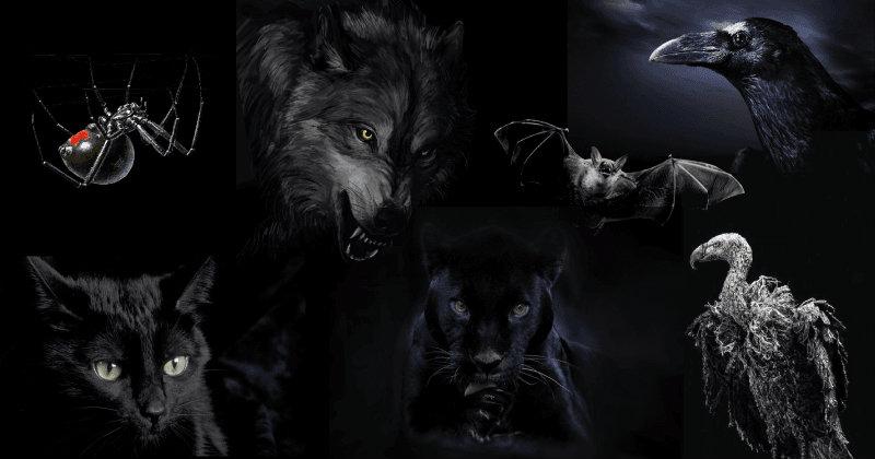 Выберите Животное И Узнайте Самый Темный Аспект Вашей Личности