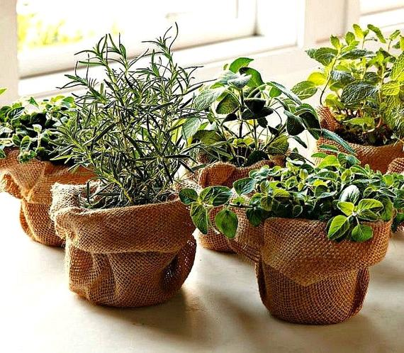 15 волшебных растений которые может использовать любой
