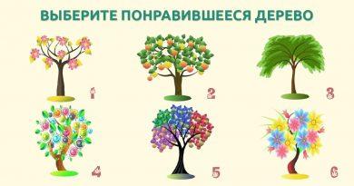 Выберите дерево на картинке, и узнайте больше о себе