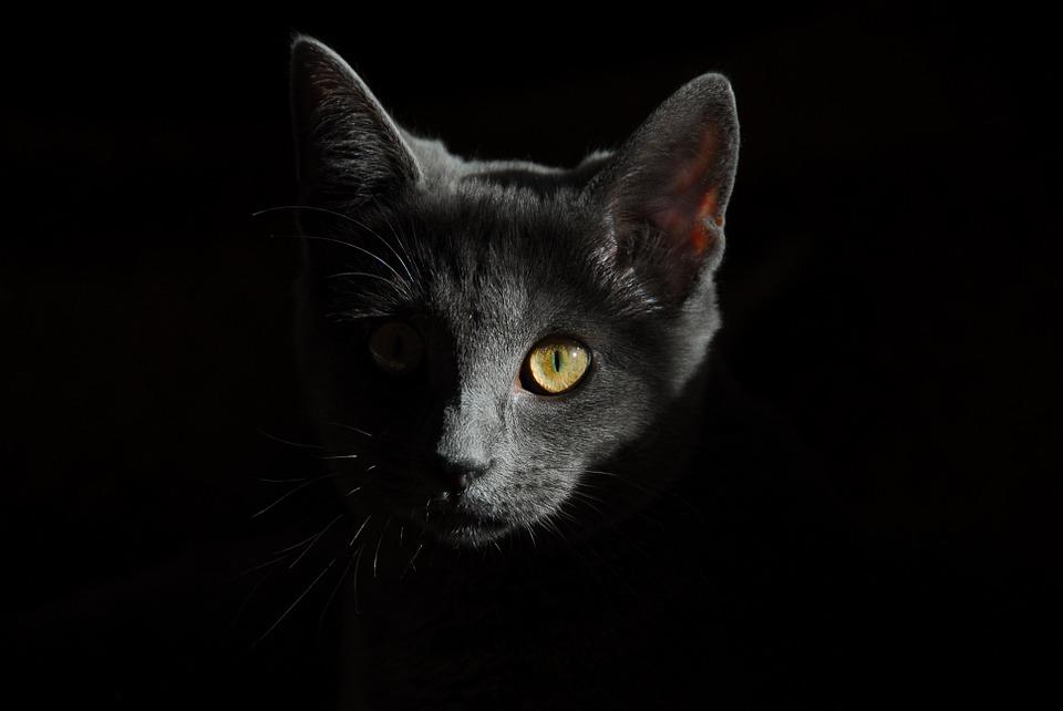 Как Наладить Телепатическое Общение С Вашей Кошкой
