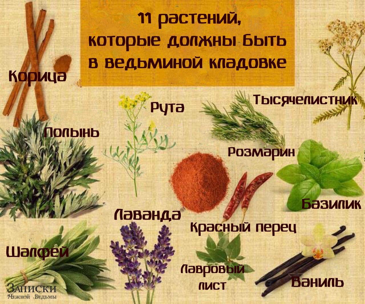 11 растений, которые должны быть в ведьминой кладовке