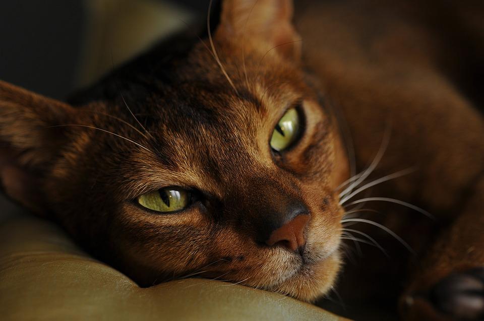 Кошка защищает Вас и Ваш дом от плохой энергии и злых духов