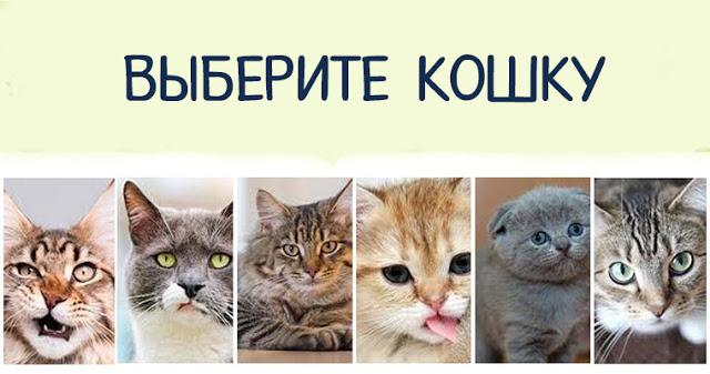 """Кошка, которую вы выберите, расскажет что-то о вашем внутреннем """"Я""""!"""