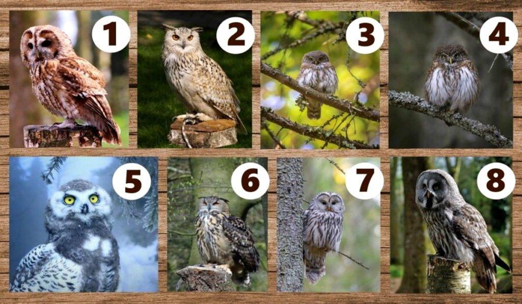 Выберите сову и получите мудрый совет!