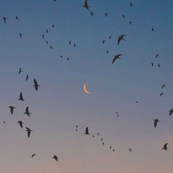 Новолуние в мае 2021. Черная Луна Лилит